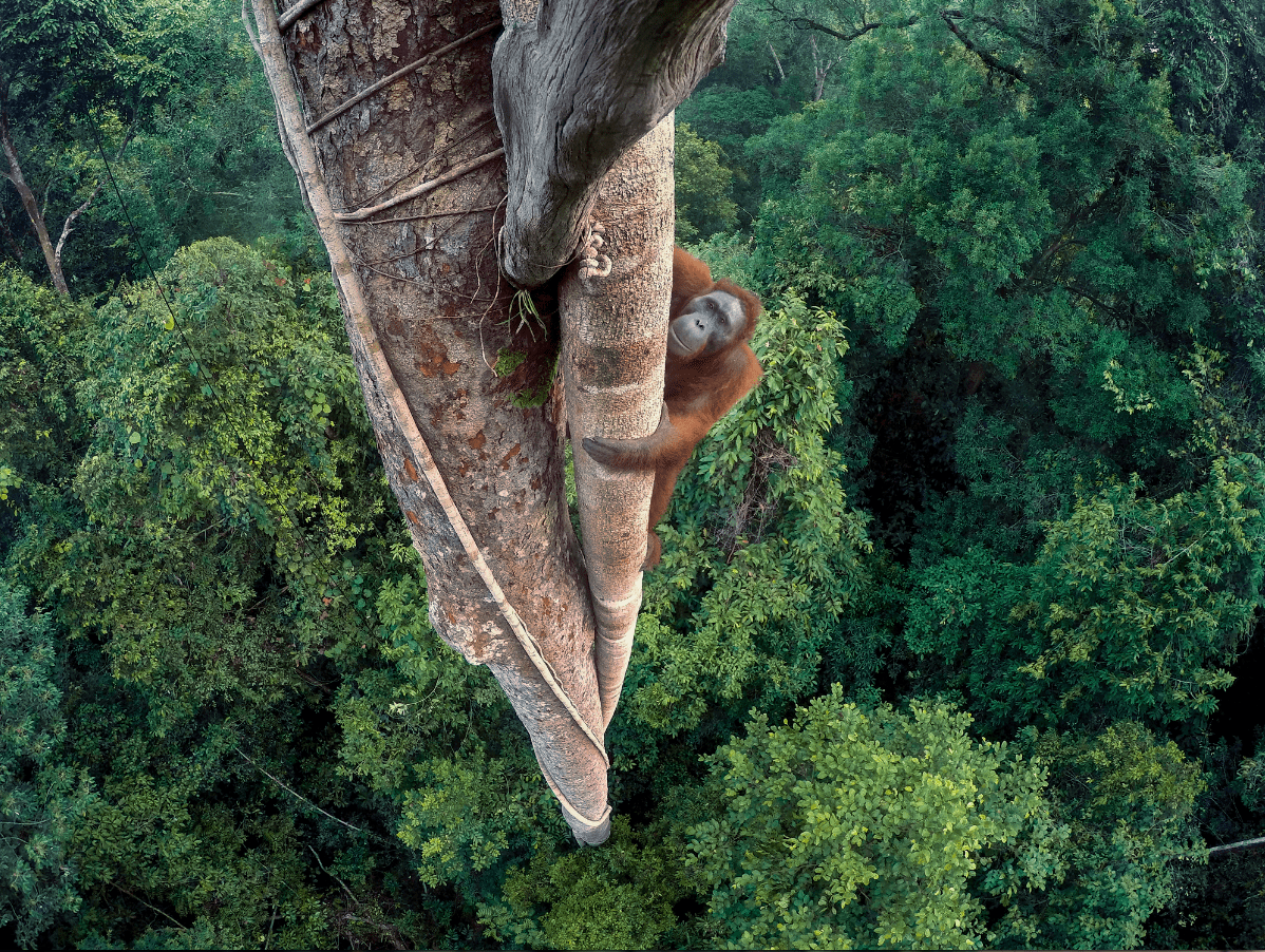 Wildlife Photographer of the Year 2016 – Bild 1
