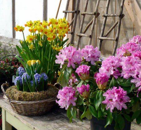 Mit Blumen bereitet man den Augen ein Fest