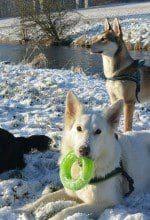 Wandertouren: Auf den Hund gekommen