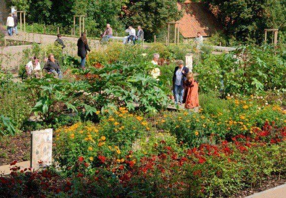 Efeu und Seifenkraut: Im Dalheimer Klostergarten wachsen noch heute Pflanzen, die als Seifenersatz genutzt wurden. Foto: LWL/Thünker