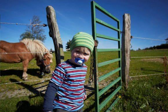 Der Umgang mit Ponys und Pferden ist bei Kindern besonders beliebt