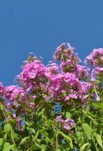Botanischer Garten lockt mit prachtvollen Blüten