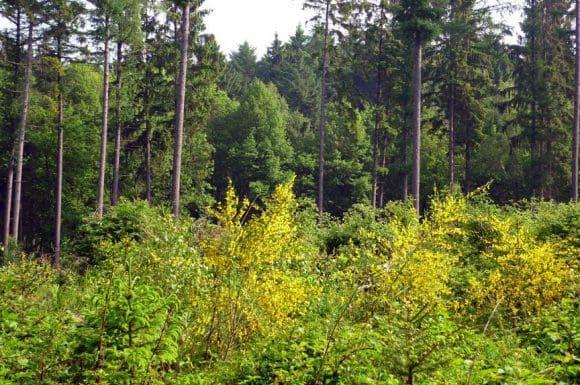 Dem geplanten Gewerbepark soll ein größeres Waldstück weichen