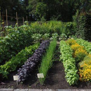 Ippenburger Gärten