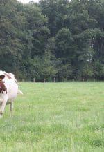 Milchtankstellen in Westfalen