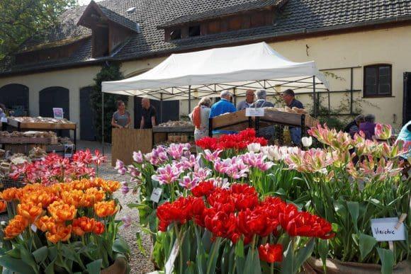 Blumen überall: Die Besucher bekamen viel zu sehen