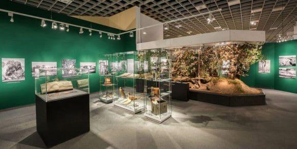 """Blick in die neue Ausstellung """"Vogelfänger, Venntüten und Plaggenstecher"""" im LWL-Museum für Naturkunde. Foto: LWL/Steinweg"""