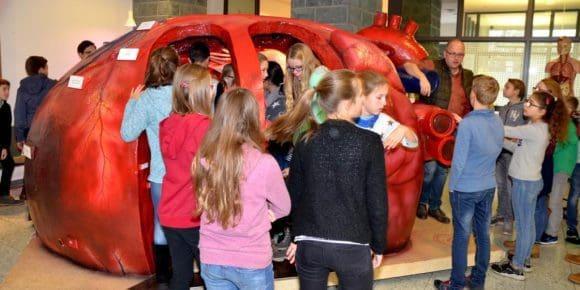 Schulklassen machten eine Reise durch das Herz