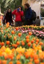 Münsterland auf der Internationalen Grünen Woche