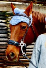 AGRAVIS: Kreative Fotos von Ross und Reitern