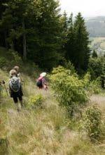 Hochsaison mit Touren und Wanderwochen