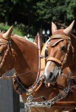 Freilichtmuseum Hagen: Pferde, Kutschen und Co