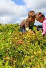 Heidelbeeren sammeln im Sauerland