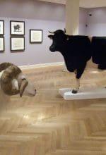 Münster: Tier-Exponate und Malerei vereint