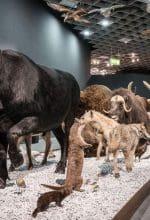 Besucherrekord in den LWL-Museen