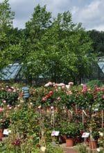 Gartenträume im Osnabrücker Land