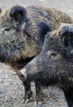 Kiepenkerl-Blog: Artenvielfalt?