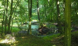 Kiepenkerl-Blog: Waldbaden