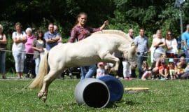 LWL-Freilichtmuseum Hagen zeigt Pferdesport