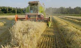 Ende der Getreideernte bestätigt Dürreschäden