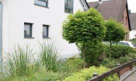 Gehölze auch für kleine Gärten