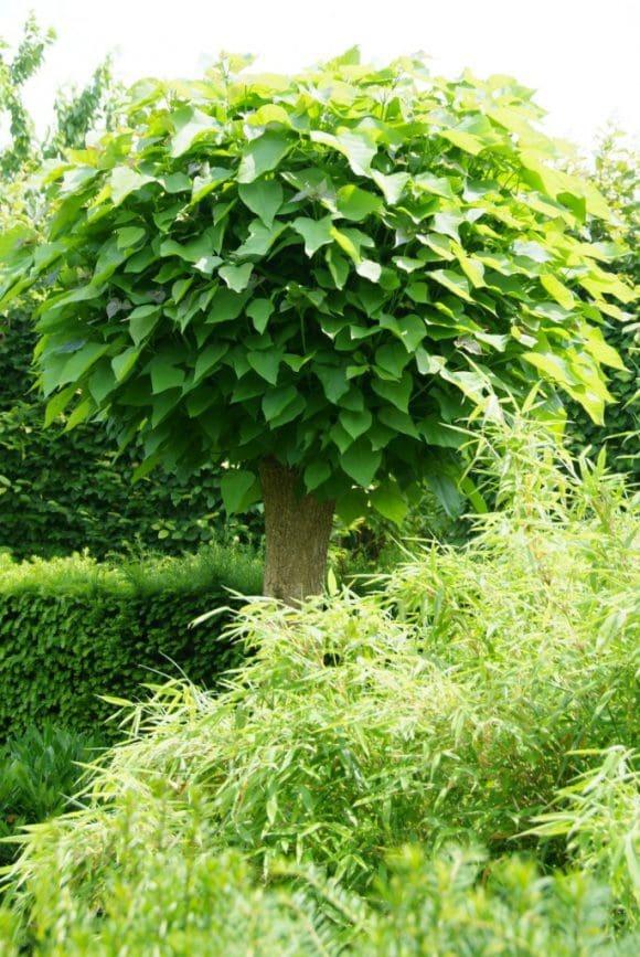 Bäume Für Kleine Gärten gehölze auch für kleine gärten • westfalen erleben