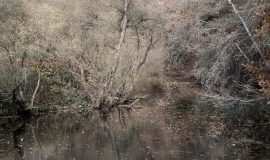 Art Galerie Siegen präsentiert  Fotoprojekt