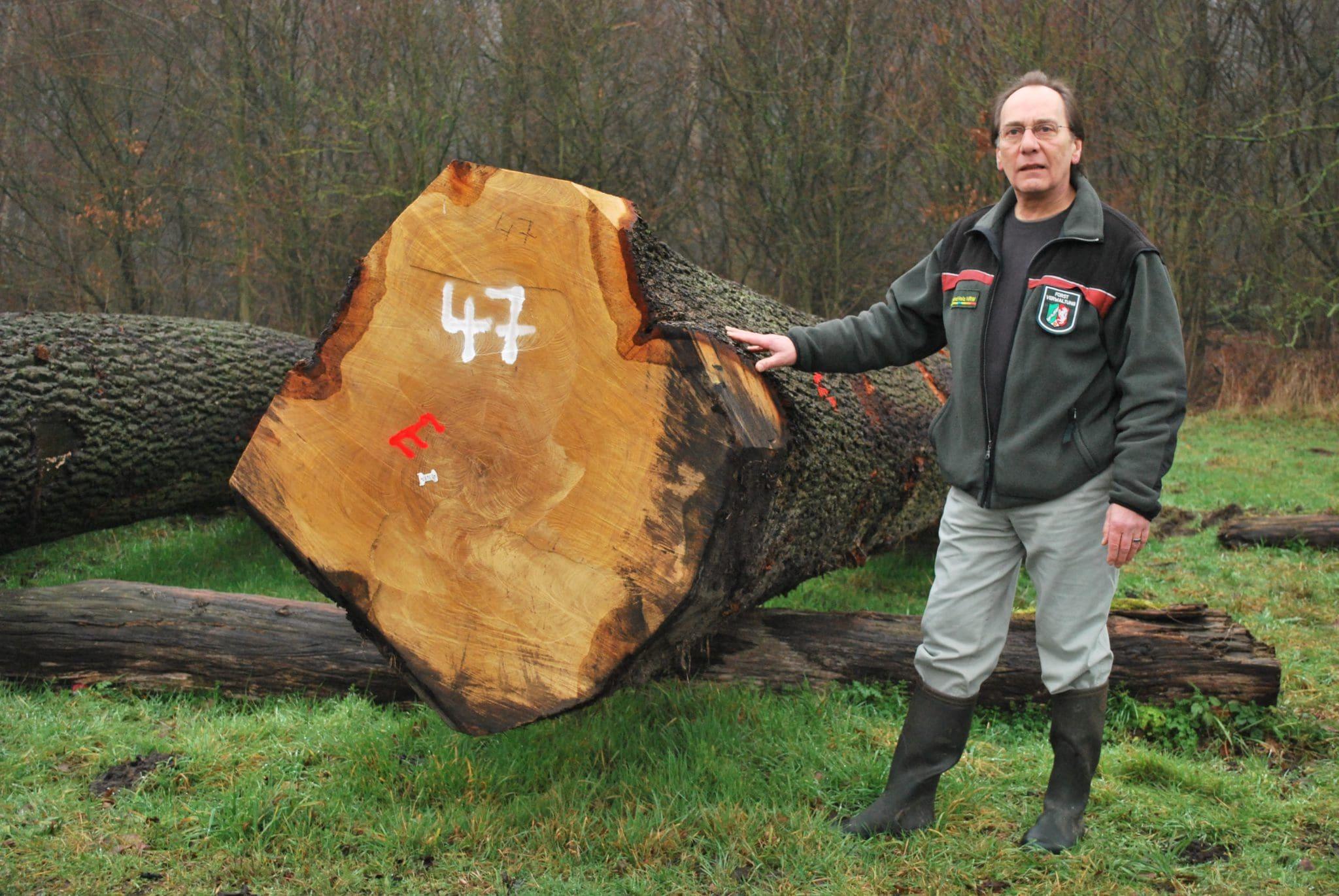 Holz unterm