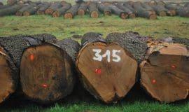 Holz unterm Hammer