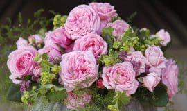 Der Juni ist der Monat der Rosenliebe