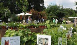 Mittsommer auf Schloss Ippenburg - Gartenfestival 2019