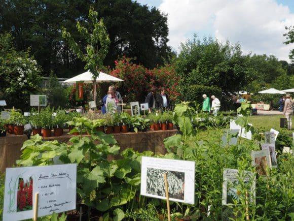 Auch beim Gartenfestival 2019 auf Ippenburg: Pflanzen im Angebot