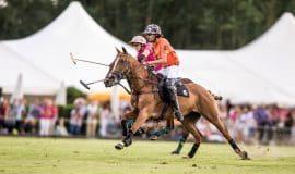 Münster: Rassige Pferde beim 16. Polopicknick
