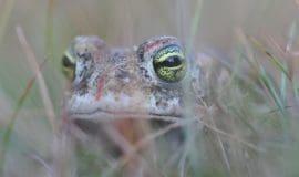 Mehr Lebensraum für seltene Pflanzen- und Tierarten im Emstal