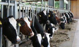 Milch: Ist der Preis zu niedrig?