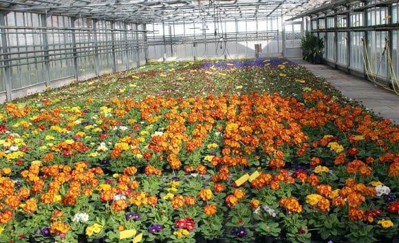55.000 Blumen