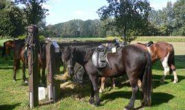 Pferde ohne Reiter machen zunehmend Sorge