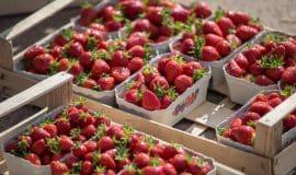 Erdbeeren kaufen direkt – gute Adressen