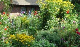 Stauden: Viel Garten, wenig Pflege