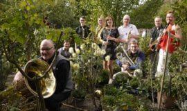 Trompetenbaum & Geigenfeige: Festival startet