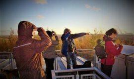 Wolfshunde – Tour auf den Spuren der Vorfahren