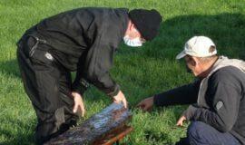 Mittelalterliches Schiffswrack geborgen