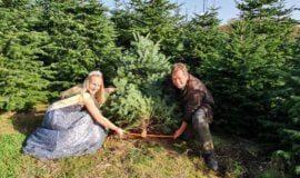 Weihnachtsbäume bleiben im Trend