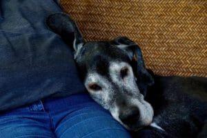 Auch Haustiere werden alt und senil