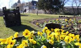 Tausende Frühjahrsblüher im Siegener Schlosspark