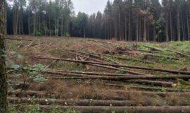 Wald in Westfalen-Lippe geht es schlecht