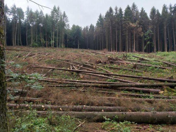 Wald ist in einem beklagenswerten Zustand