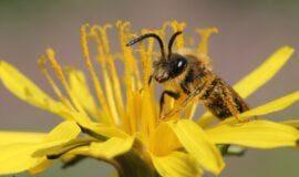 """Wie Westfalen """"was für Bienen tun"""""""