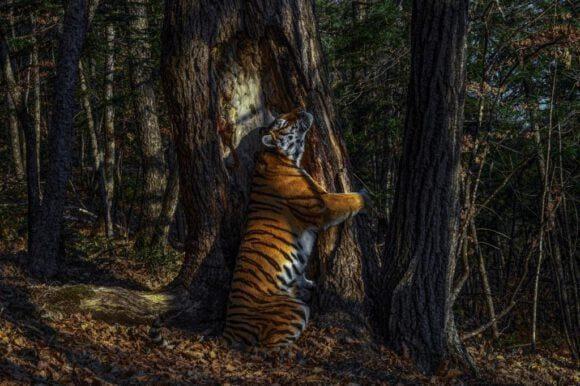 Perdemuseum zeigt ausgezeichnete Tierfotos