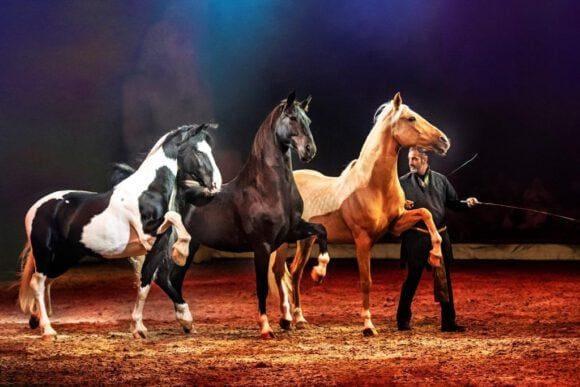 Pferdeshow CAVALLUNA im nächsten Jahr